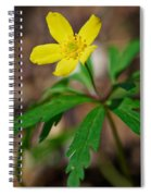 Yellow Wood Anemone Spiral Notebook