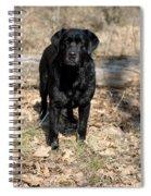 Black Labrador Retriever Spiral Notebook