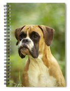 Boxer Dog Spiral Notebook