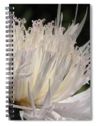 Centaurea Named The Bride Spiral Notebook