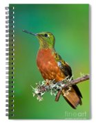 Chestnut-breasted Coronet Spiral Notebook