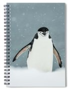 Chinstrap Penguin  Pygoscelis Spiral Notebook