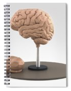 Clay Model Of Brain Spiral Notebook