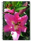 Dwarf Oriental Lily Named Farolito Spiral Notebook
