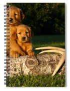 Golden Retriever Puppies Spiral Notebook