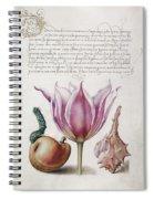 Illuminated Manuscript Spiral Notebook