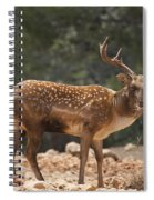 Mesopotamian Fallow Deer  Spiral Notebook