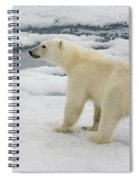 Polar Bear Crossing Ice Floe Spiral Notebook