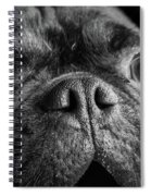 Portrait Of Pug Bulldog Mix Dog Spiral Notebook
