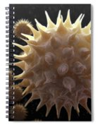 Sunflower Pollen Spiral Notebook