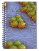 Superbug Mrsa Spiral Notebook