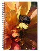 Dahlia From The Showpiece Mix Spiral Notebook