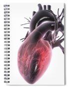 Heart Anatomy Spiral Notebook