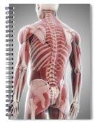 Human Muscles Spiral Notebook