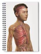 Internal Anatomy Pre-adolescent Spiral Notebook