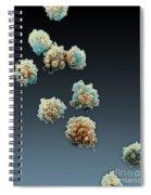 Lymphocytes Undergoing Apoptosis, Sem Spiral Notebook
