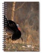 Male Eastern Wild Turkey Spiral Notebook