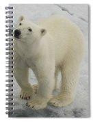 Polar Bear Crossing Ice Floe Spiral Notebook