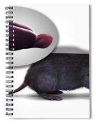 Rat Brain Anatomy Spiral Notebook