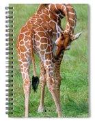 Reticulated Giraffe Spiral Notebook