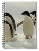 Adelie Penguins Spiral Notebook