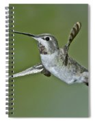 Annas Hummingbird Spiral Notebook