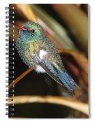 Broad-billed Hummingbird Spiral Notebook