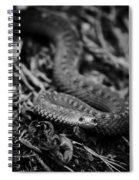 European Adder Spiral Notebook