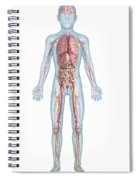 Internal Anatomy Pre-adolescent Spiral Notebook