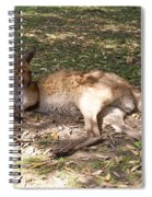 Kangaroos Spiral Notebook