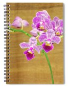 Purple Orchid-12 Spiral Notebook