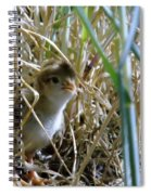A Baby Quail Looks Back Spiral Notebook
