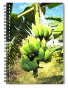 A Banana Field In Late Afternoon Sunlight With Sky And Clouds Spiral Notebook