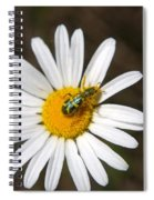 A Beattle On A Daisy Spiral Notebook