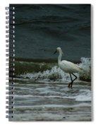 A Beautiful Snowy White Egret On Hilton Head Island Beach Spiral Notebook