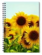 A Beautiful Sunflower Field Spiral Notebook