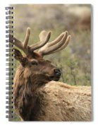 A Beautiful Young Rack Spiral Notebook