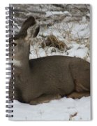A Bed Of Snow Spiral Notebook
