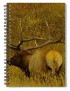 A Big Bull Elk Spiral Notebook