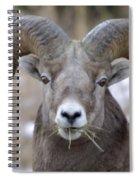 A Big Ram Caught With His Mouth Full Spiral Notebook