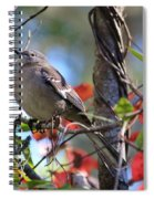 A Bird Enjoying The View Spiral Notebook