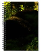 A Black Bear Spiral Notebook