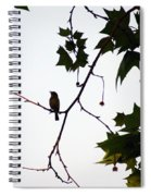 A Brown Thrasher Sings In Sycamore Tree Spiral Notebook