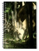 A Buck Deer Grazes Spiral Notebook