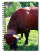 A Bull  Grazing On The Meadow Spiral Notebook