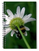 A Bumble On The Wrong Side Spiral Notebook