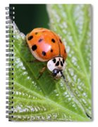 A Busy Lady Spiral Notebook