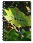 A Buttterfly Resting Spiral Notebook
