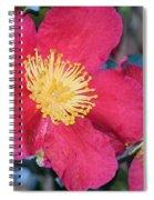 A Christmas Blossom Spiral Notebook