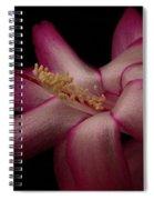 A Christmas Cactus  Spiral Notebook